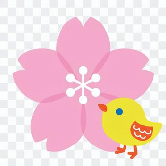 Cherry blossoms and chicks