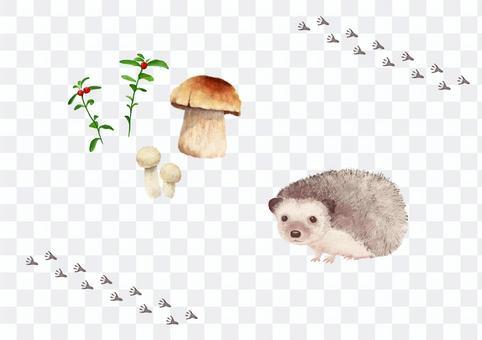 刺猬和蘑菇