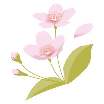 Cherry blossom point