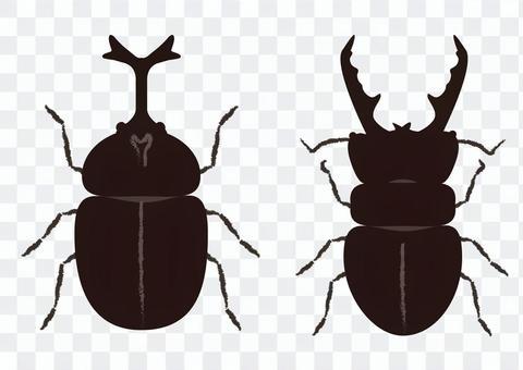 Beetle_ beetle & amp; stag beetle