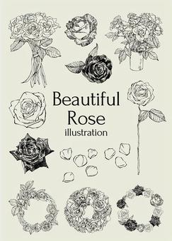 玫瑰的插圖