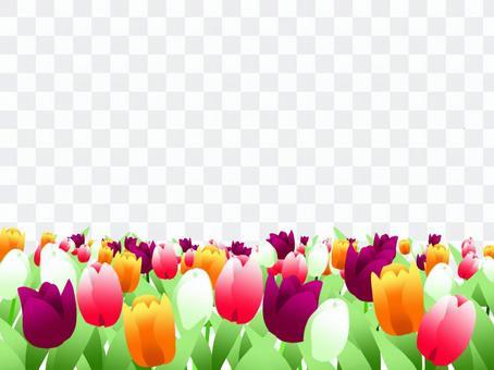 鬱金香花場框架