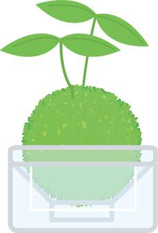 寵物瓶青苔球/苔蘚玻璃容器