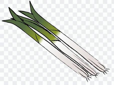 日式洋蔥長洋蔥