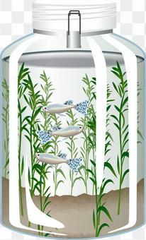 アクアリウム ブルーグラス 鑑賞魚 魚