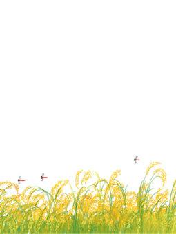 稻田景觀垂直尺寸