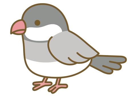 一隻可愛的 Java 麻雀的插圖