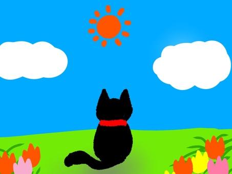 太陽と黒猫