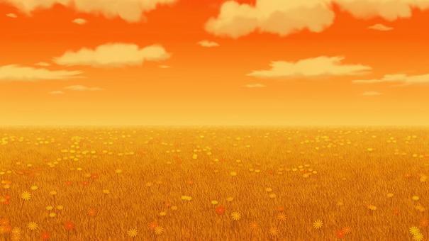 晚上草地和花卉風景背景16:9