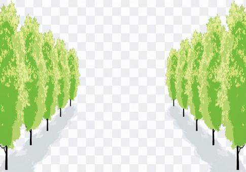 Poplar Namiki Street Tree Spring Summer Landscape 1