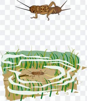 カワゲラ 昆虫 幼虫 水生昆虫 川 池