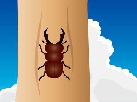 鍬形蟲和積雨雲的插圖