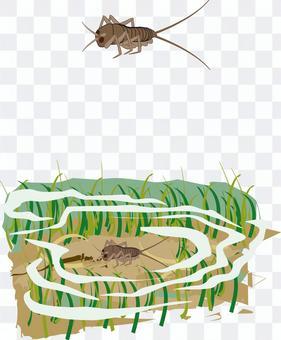 カゲロウ 昆虫 幼虫 水辺 水中