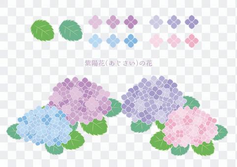 八仙花屬(繡球花)花