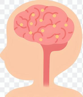 Brain (Lewy body dementias)