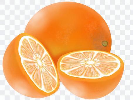 橙色插圖(真實感)