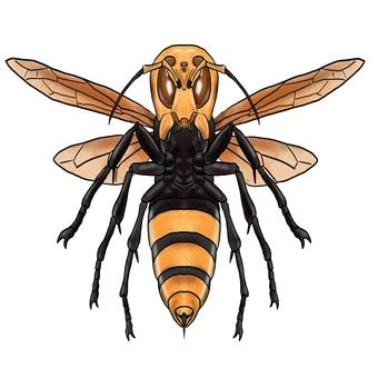 巨型大黃蜂或巨型蜜蜂怪物