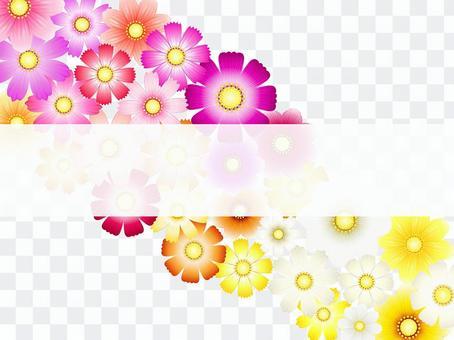 秋向け・コスモス背景・白帯付3