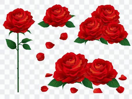 現實的紅玫瑰材料集合