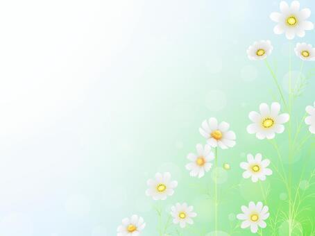 秋向け・コスモスのフレーム13白