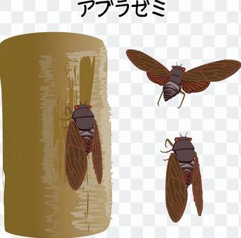 蟬棕色蟬夏天鳴叫飛行昆蟲