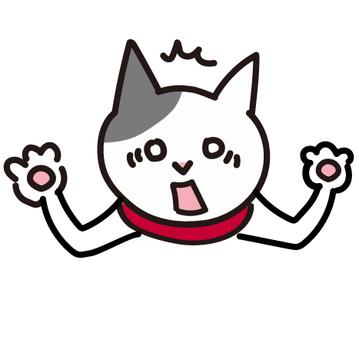 驚訝和驚訝的貓