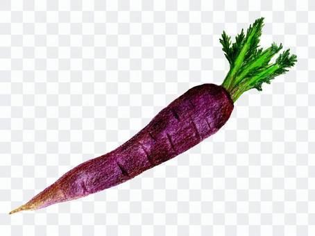 カロータ02(色鉛筆画のイタリア野菜)
