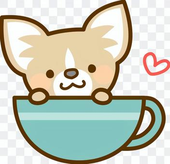 Chihuahua in the cup