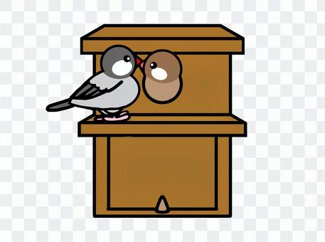 Java sparrow birdhouse