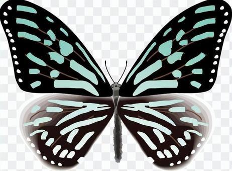 リュウキュウアサギマダラ 蝶 蝶々