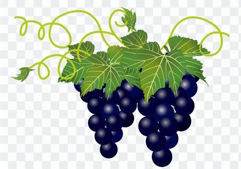 美味的葡萄4
