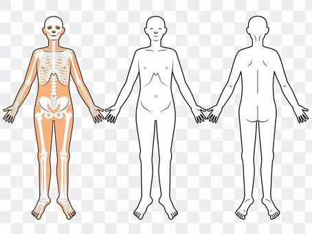 Questionnaire / Explanation / Human Body