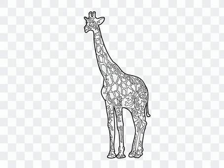 Giraffe coloring