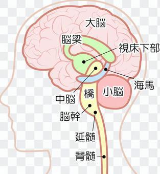 Brain structure map