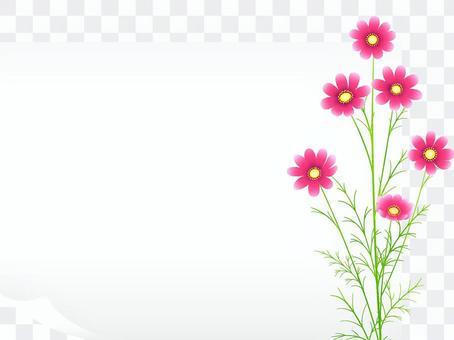秋向け・白紙・コスモスのフレーム36