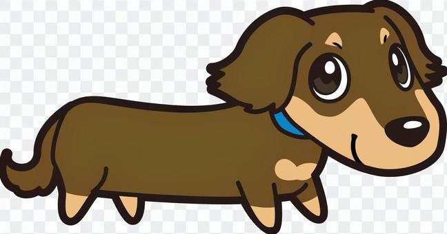 狗_迷你臘腸犬