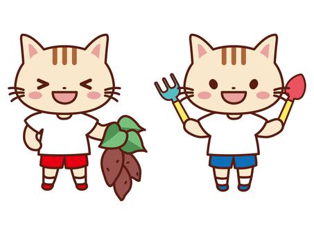 土豆挖掘_貓