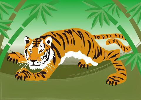 Animals _ Tiger 1