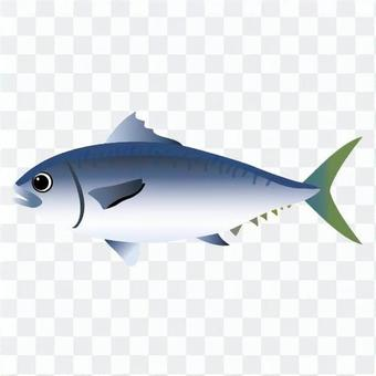 Slender fish
