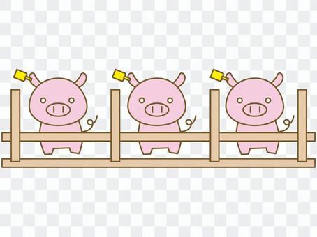Livestock swine