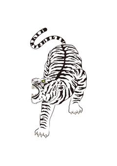 Tiger illustration 02