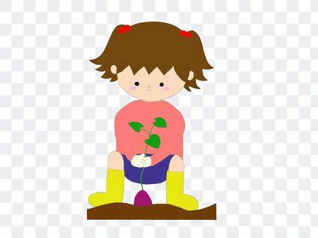 女孩挖土豆
