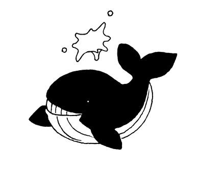 鯨魚黑色和白色