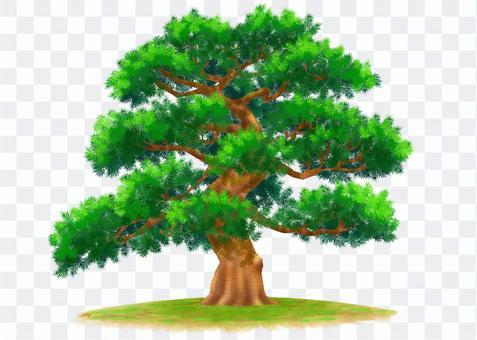 Nature Illustration-Pine Tree