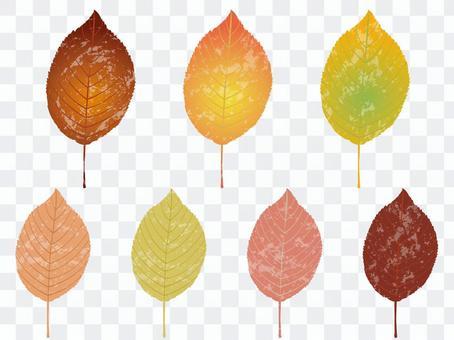 가을 잎 6