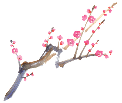 Hand-painted watercolor plum blossom / plum branch vector