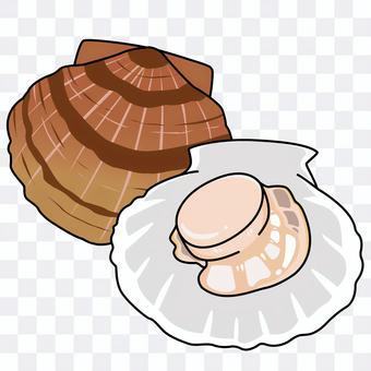 貝の「ホタテ」のイラスト