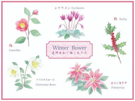 冬天花集合繪與透明水彩