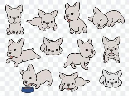 法國鬥牛犬(白色)姿勢集