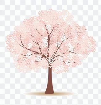 樱桃树(以图例解释者通行证)